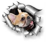 A4 Size Ripped Torn Metal Design With French Bulldog Motif External Vinyl Car Sticker 300x210mm
